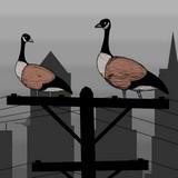 Игра Симулятор Птицы
