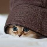 Игра Найди Кота