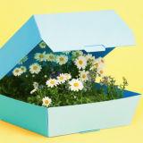 Игра Тест: Какой Ты Цветочек