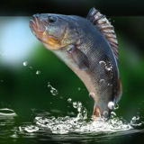 Игра Рыбалка на Зелёном Озере