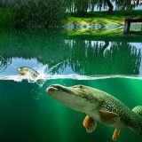 Игра Симулятор Рыбака