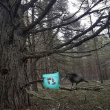 Игра Возвращение В Замерзший Лес